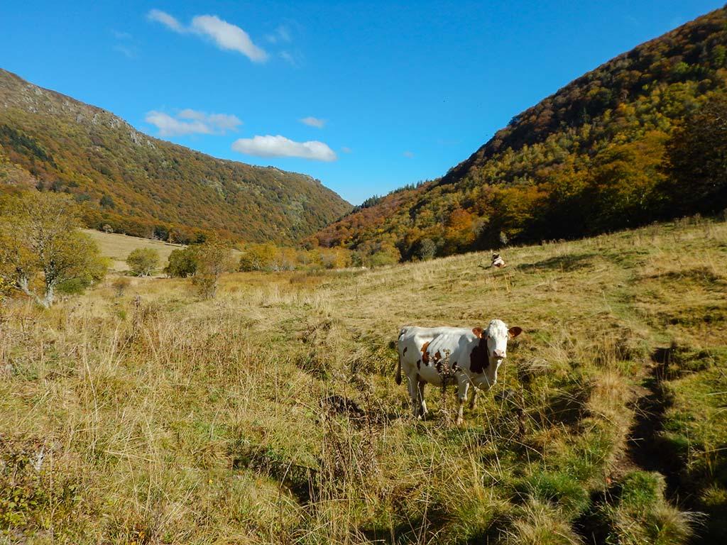 Une immersion photographique au coeur de la réserve naturelle de la vallée de Chaudefour au coeur de l'Auvergne à la découverte des techniques de la photo de paysages.